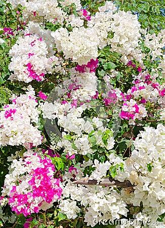 春天开花的树 库存照片