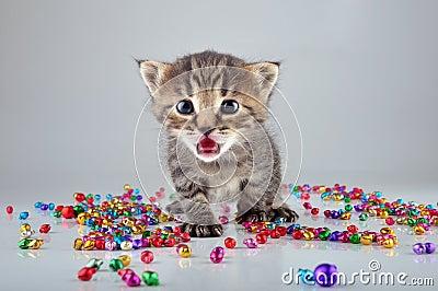 与小金属门铃的小的小猫成串珠状