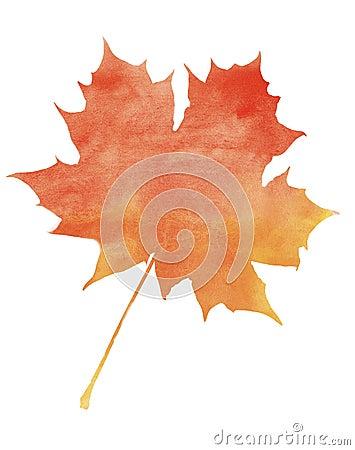 在白色背景的艺术性的水彩红槭叶子.图片