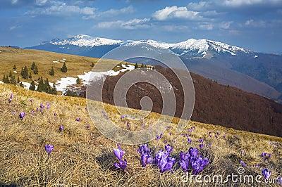 在山的第一朵春天花