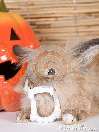 兔子牙美女手机壁纸