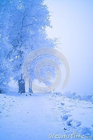 一个结冰的早晨