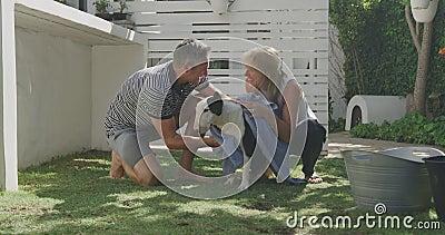 一对夫妇在花园里洗狗 股票录像