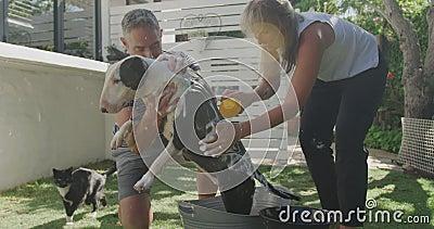 一对夫妇在花园里洗狗 股票视频