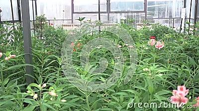 一种种花的温室 影视素材