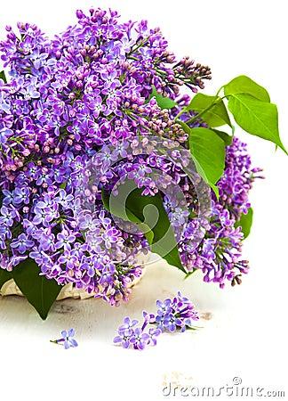 在一个背景的美丽的白色丁香在丁香木篮子.新凯城花束苑出租图片