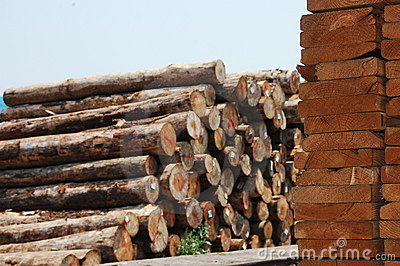 上原始堆木头森林