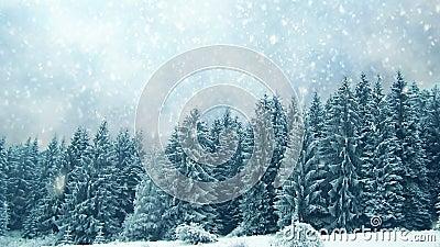 下雪在树 在山的冬天