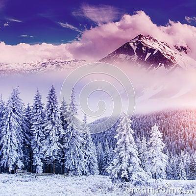 不可思议的冬天风景 carpathians 乌克兰,欧洲.图片