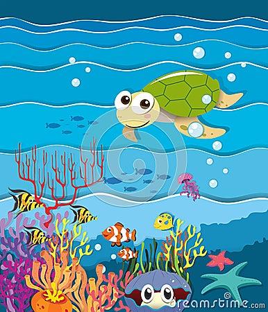 与乌龟和鱼的水下的场面图片