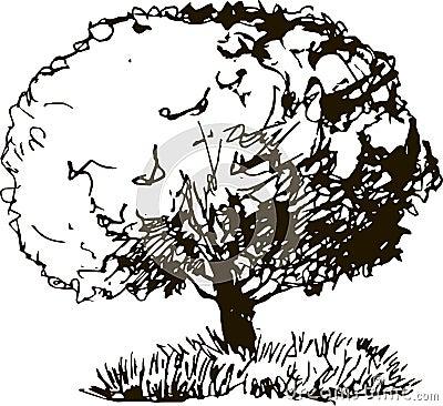 与叶子和草的落叶树图片