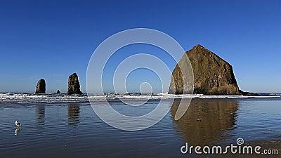 与干草堆岩石的大炮沿俄勒冈的海滩和针沿岸航行1080p 股票视频