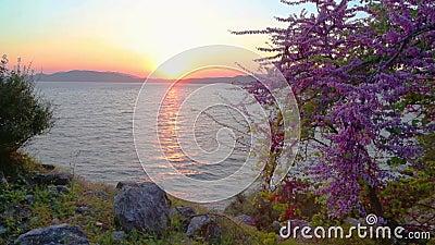 与日落的春天在hisaronu区域附近在马尔马里斯港 影视素材