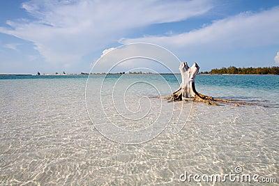 与空白沙子的热带海滩