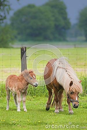 与突出在草甸的驹的母马