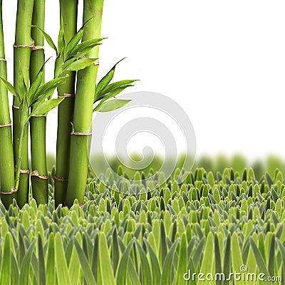 与绿草的竹子在空白背景