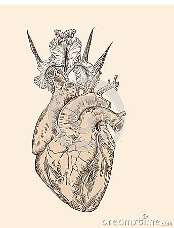与花的画的人的心脏图片