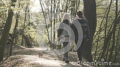 两位年轻女子与小狗在森林小巷中行走的回眸 带背包的白人千禧女孩 股票录像
