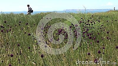 乌克兰别列赞岛 — 2019年6月2日:岛上的野葱 别列赞·博里斯特尼斯;皮雷津是 影视素材
