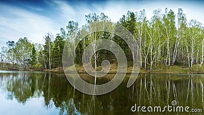 云下春林池塘 影视素材