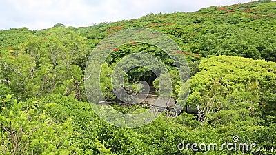 亚马逊热带雨林空景 绿树 影视素材