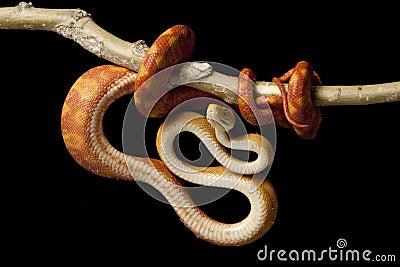 巨型食人鱼图片_亚马逊巨蟒_亚马逊巨人蜈蚣_亚马逊蟒蛇_淘宝学堂