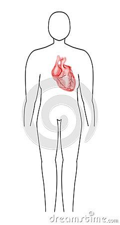 心脏医疗题目的人体和心脏用途.