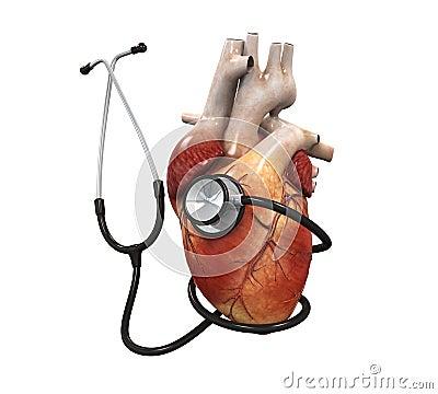 人的心脏和听诊器