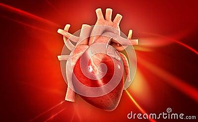人的心脏的数字式例证在颜色背景中.图片