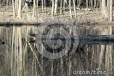 仅有的灌木池塘