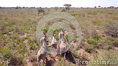 从空中拍摄的非洲丛林中, 股票视频