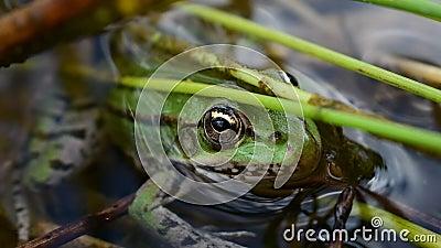 传奇青蛙 股票视频