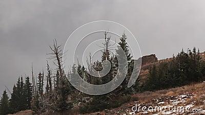 使横跨老废墟的漂泊模糊在布赖恩头峰顶顶部在南犹他在一冷的多雪的天在10月 股票视频