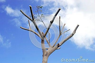 停止的结构树