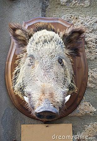 公猪顶头通配