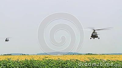 军用直升机飞行在向日葵的领域,敌意,飞机 股票录像