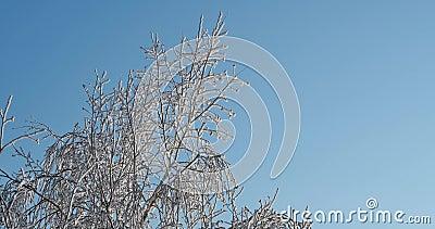 冻结树 影视素材
