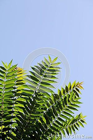 分支与绿色叶子