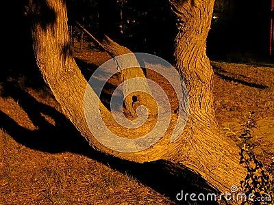 分支的结构树