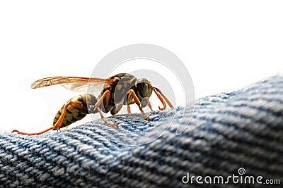 危险潜伏的黄蜂