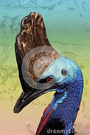 古怪鸟的食火鸡