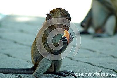 猴子为什么跟人�y.b9`�_吃猴子年轻人
