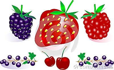 向量浆果收集