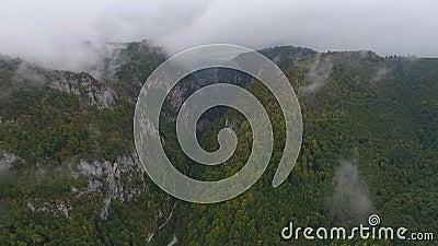 喀尔巴阡山脉的奥尔泰特自然保护区 股票视频