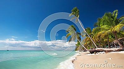 在一个偏僻的热带海岛上的棕榈树