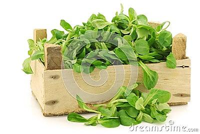 用_在一个木板箱的新鲜的菜用结页草