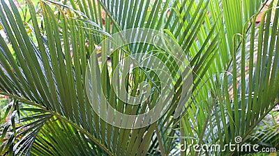 在加勒比的热带雨林中,艳阳照耀着美丽的绿叶 股票视频