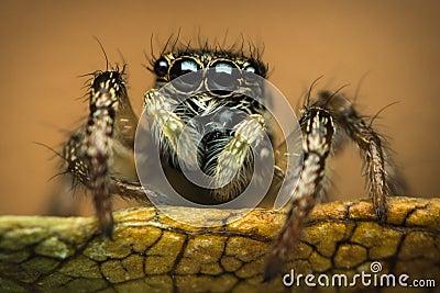 在叶子的蜘蛛