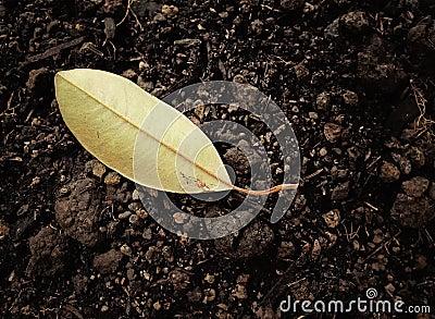 在土壤的干燥叶子