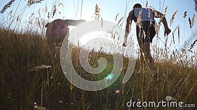 在大自然的绿山上和狗一起跑的年轻人 拉布拉多犬或金毛猎犬与主人慢跑 股票录像